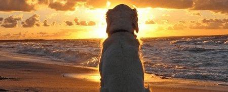 Hond en trein naar het strand