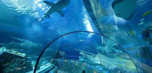 Trein Sea Life Scheveningen