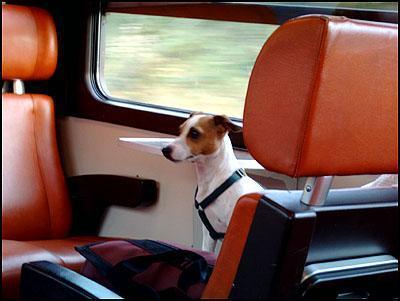 Hond in trein
