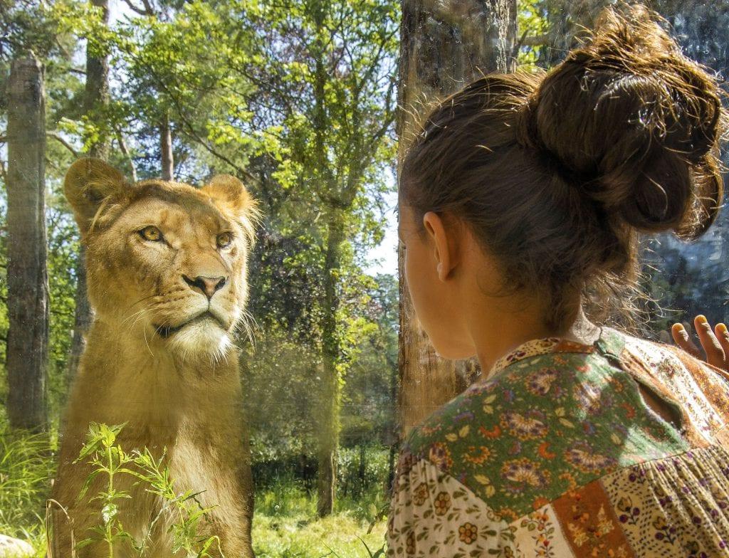 Dierenpark Amersfoort Leeuwen