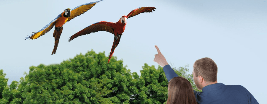 Diergaarde Blijdorp Papagaai