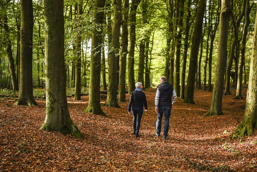 Wandelen stel bos Utrechtse Heuvelrug