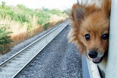 Mag ik mijn huisdier meenemen in de trein?